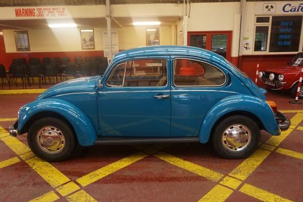Beetle  (8)